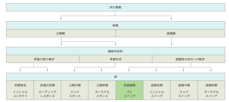 歩行周期分類